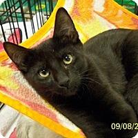 Adopt A Pet :: Wiser V - Sacramento, CA