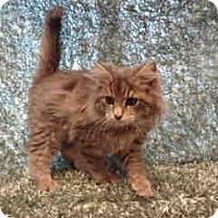 Adopt A Pet :: Remi - Arlington, VA
