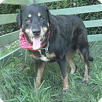 Adopt A Pet :: Dolly - Crescent City, CA