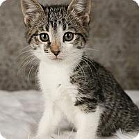 Adopt A Pet :: Dollie - Eagan, MN