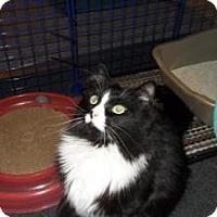 Adopt A Pet :: Illia - Milwaukee, WI