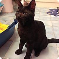 Adopt A Pet :: Fritz - Miami, FL