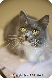 Domestic Longhair Cat for adoption in Byron Center, Michigan - Ashley