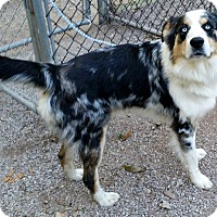 Adopt A Pet :: Buddy - Jacksboro, TN