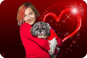 Shih Tzu Mix Dog for adoption in Livonia, Michigan - Izzy - Adopted 02/28/2015