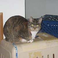 Adopt A Pet :: CA - Cookie (CP) - HAYWARD, CA