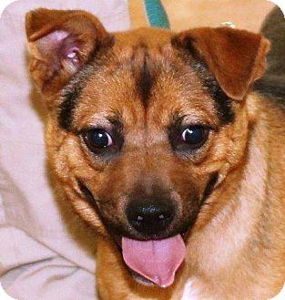 Terrier (Unknown Type, Medium) Mix Dog for adoption in McDonough, Georgia - Zamboni