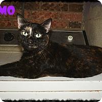 Adopt A Pet :: Kosmo - Converse, TX