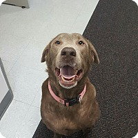 Adopt A Pet :: SWEET PEA - Sandusky, OH