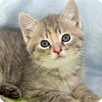 Adopt A Pet :: Mouse - Greenfield, IN
