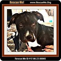 Adopt A Pet :: Monty - Rancho Cucamonga, CA