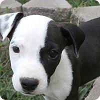 Adopt A Pet :: Martin - Wichita Falls, TX