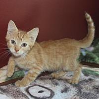 Adopt A Pet :: Hobbes (& Calvin) - Herndon, VA