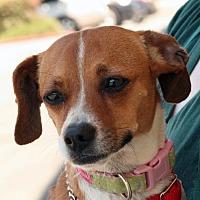 Adopt A Pet :: Lelani - Palmdale, CA