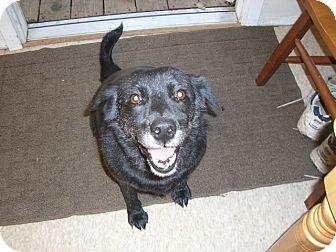 Labrador Retriever Mix Dog for adoption in Fair Oaks Ranch, Texas - Lee Lee