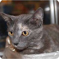 Adopt A Pet :: Sydney - New Port Richey, FL
