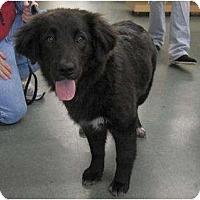 Adopt A Pet :: Sienna - Alexandria, VA