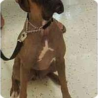 Adopt A Pet :: Hamburglar - Thomasville, GA