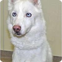 Adopt A Pet :: Primo - Port Washington, NY