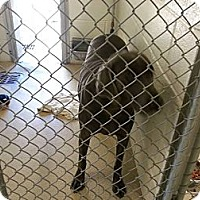 Adopt A Pet :: Bitsy - Jacksboro, TN