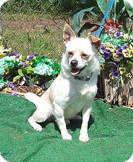 Chihuahua Mix Dog for adoption in Marietta, Georgia - AVERY