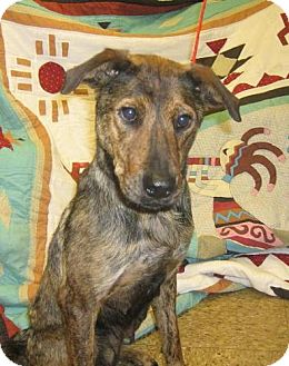 Shepherd (Unknown Type)/Terrier (Unknown Type, Medium) Mix Dog for adoption in Kankakee, Illinois - Cinnamon