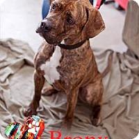 Adopt A Pet :: Bronx - Ottawa, ON