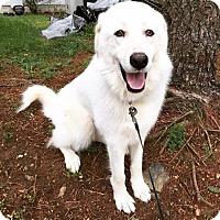 Adopt A Pet :: Suzie B - Frederick, MD