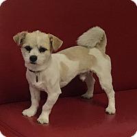 Adopt A Pet :: Bistro - Los Angeles, CA
