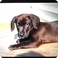 Adopt A Pet :: Emma - Naperville, IL