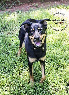 Shepherd (Unknown Type) Mix Dog for adoption in Charlotte, North Carolina - Brighton
