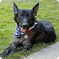 Adopt A Pet :: Baldwin - Sacramento, CA