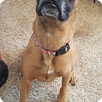 Adopt A Pet :: Daisy Duke - Florence, KY