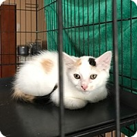 Adopt A Pet :: Zoe - Walnut Creek, CA