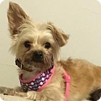 Adopt A Pet :: Poppy - ST LOUIS, MO