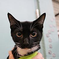 Adopt A Pet :: Magnolia - Sarasota, FL