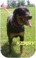 Rottweiler Dog for adoption in Oswego, Illinois - ROCKO (placed) & KERRY