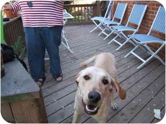 Golden Retriever/Hound (Unknown Type) Mix Dog for adoption in Wallaceburg, Ontario - Wyatt