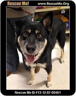 German Shepherd Dog Mix Dog for adoption in Anza, California - Koda