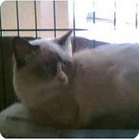Adopt A Pet :: Lyla - Clementon, NJ