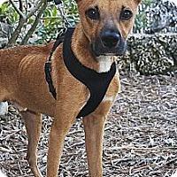 Adopt A Pet :: Odie - North Palm Beach, FL