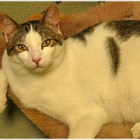 Adopt A Pet :: Joe and Joseph - Milford, MA
