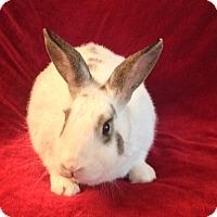 Adopt A Pet :: Daffodil - Williston, FL