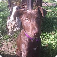 Adopt A Pet :: Freda - Nashville, TN