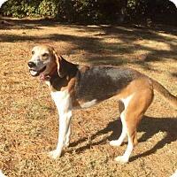 Adopt A Pet :: Molly - Virginia Beach, VA