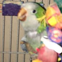 Adopt A Pet :: Mango - Punta Gorda, FL