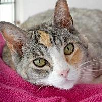 Adopt A Pet :: Gabby - Rancho Santa Fe, CA