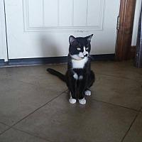 Adopt A Pet :: Pixel - Elgin, OK