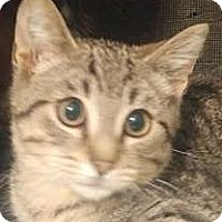 Adopt A Pet :: Chippie - Rochester, NY