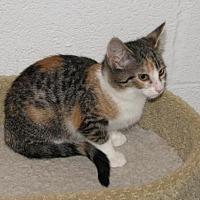 Adopt A Pet :: Alza (baby girl) - Spring Grove, PA